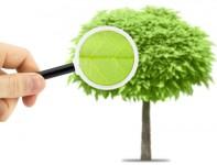 Long Island Tree Care